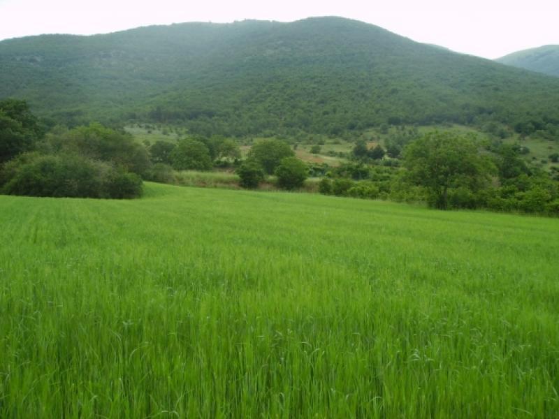 Annunci immobiliari gratuiti su terreni agricoli nella - Casa abusiva su terreno agricolo ...